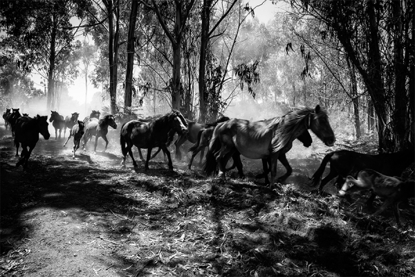 PEDRO ESTEVES - WILD HORSES