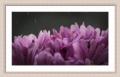 Moldura branca com friso violeta-1012-3