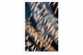 RUI DAVID - PONTAS SOLTAS-F1000755_MPR60X40-2