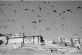 SERGE HORTA - THE BIRDS-F1000813_MPR60X40-0
