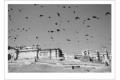 SERGE HORTA - THE BIRDS-F1000813_MPR60X40-2