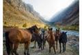 SERGE HORTA - WILD HORSES OF KYRGYZSTAN-F1000846_MPR60X43-0