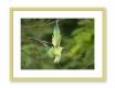Moldura Verde Pistacho de 2 cm-MARCOS57-3